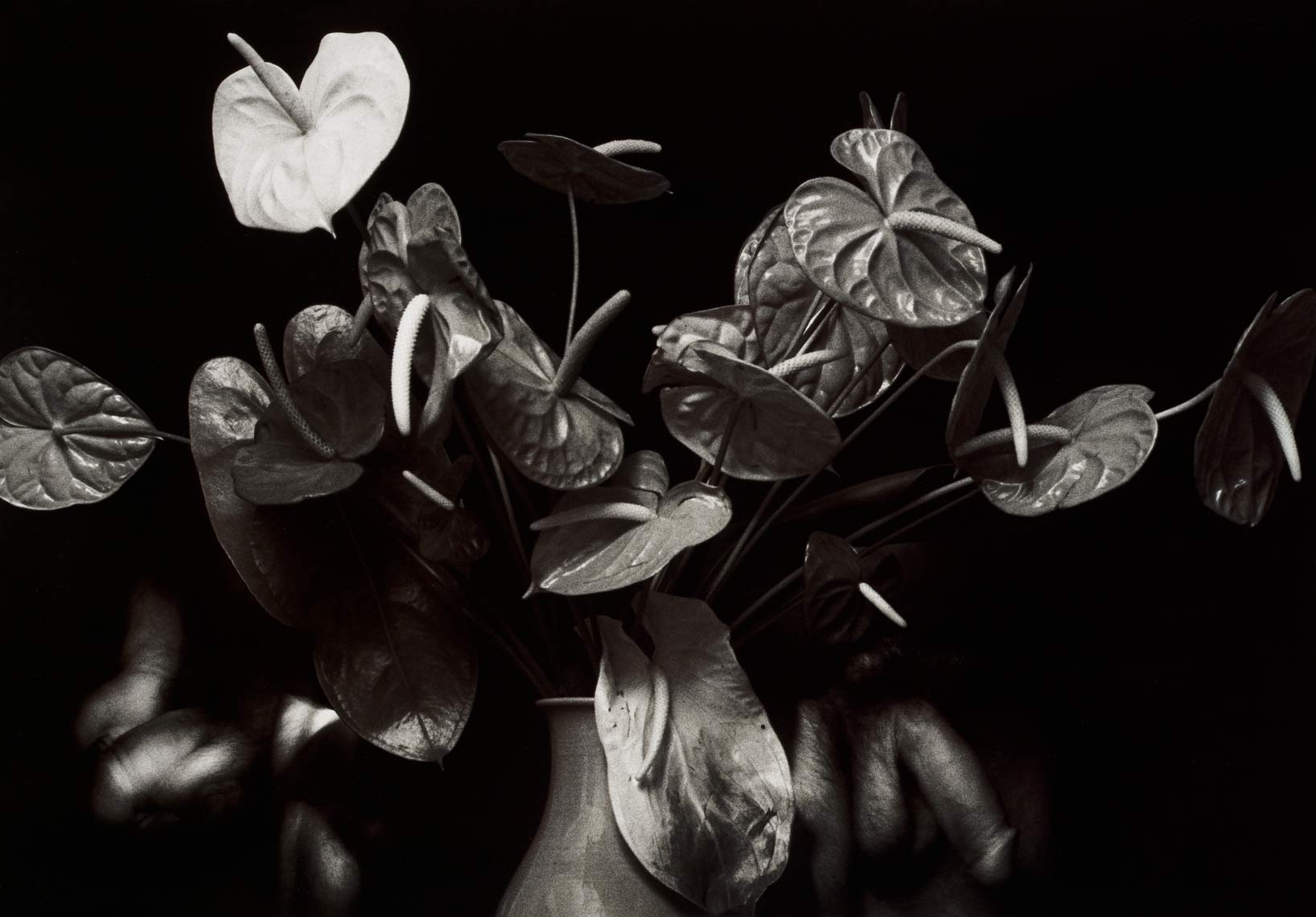 David Lebe; Anthurium Display, 1988, male nude, black and white photograph