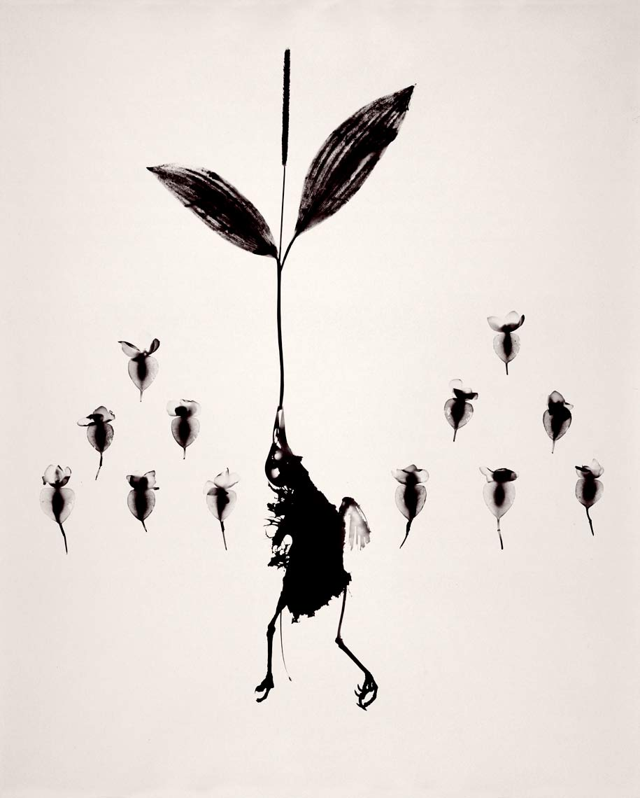 David Lebe; Bird 4, 1981, black and white photogram