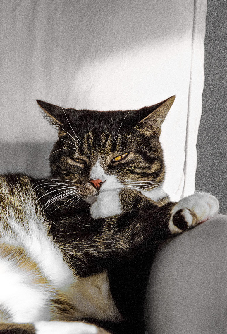 David Lebe; Coy Cat, 1999, cat photograph