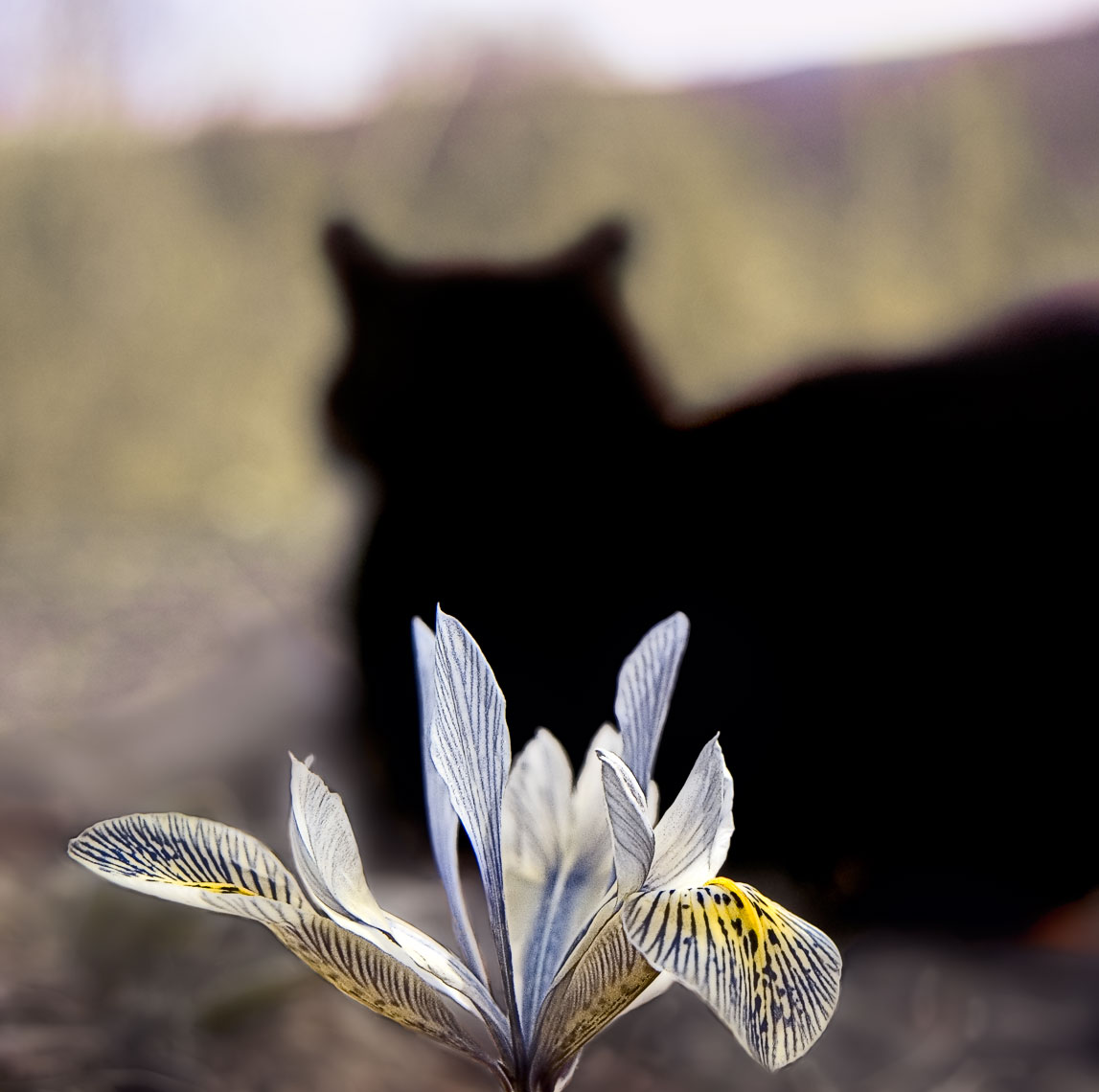 David Lebe; Early Spring Contemplation, 2007, cat photograph