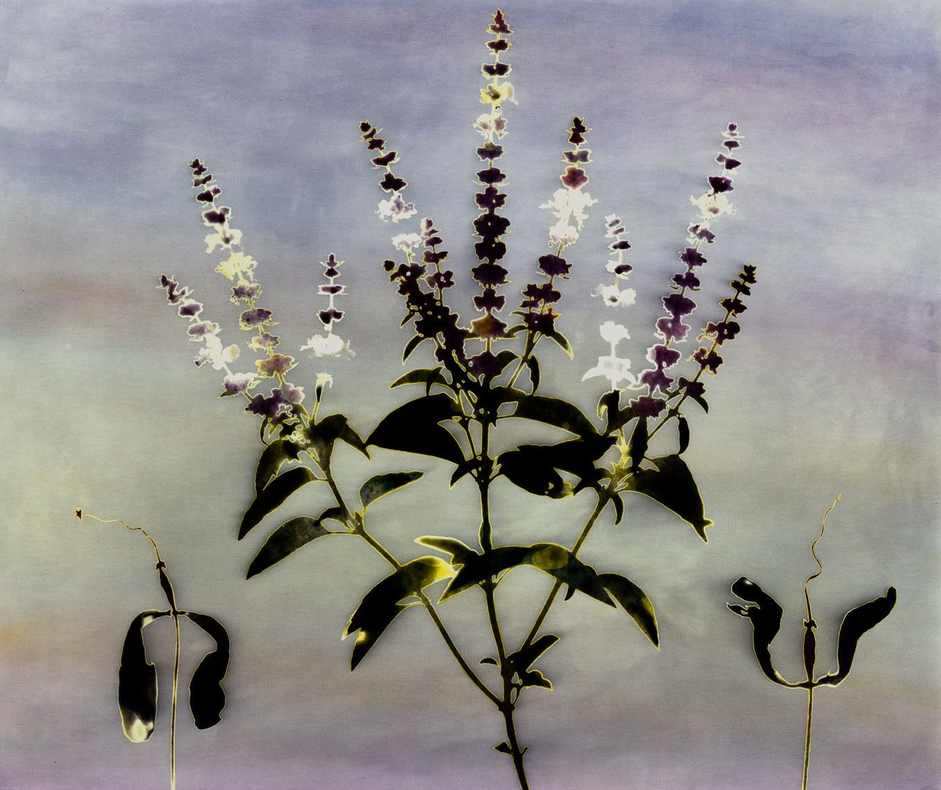 David Lebe; Garden 3, 1979, hand colored photogram