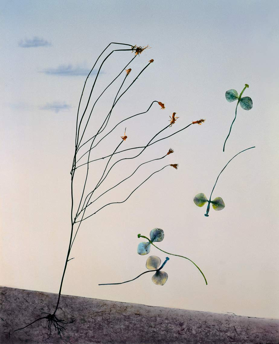 David Lebe; Landscape 20, 1985, hand colored photogram