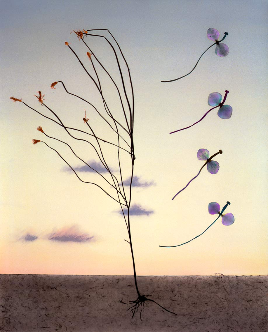 David Lebe; Landscape 21, 1985-vB, hand colored photogram