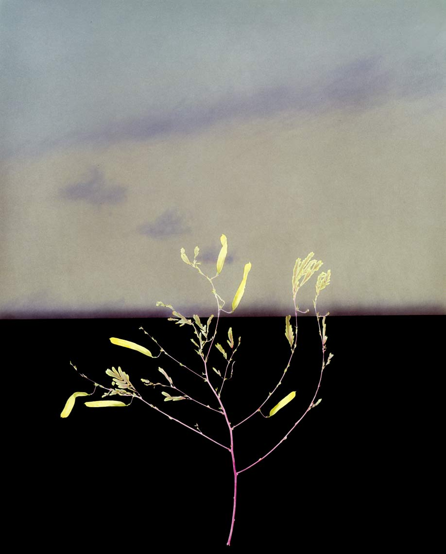 David Lebe; Landscape 9, 1984, hand colored photogram