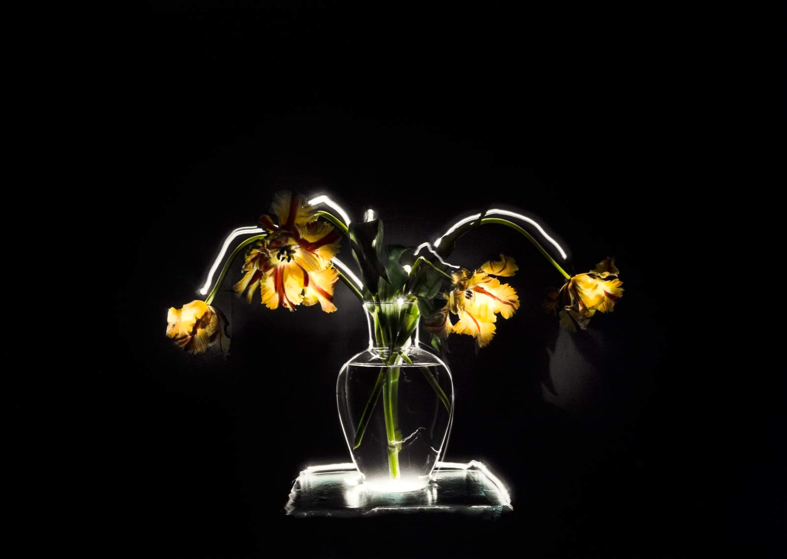 David Lebe; Parrot Tulips 1, 1987, still life, light drawing, hand colored photograph