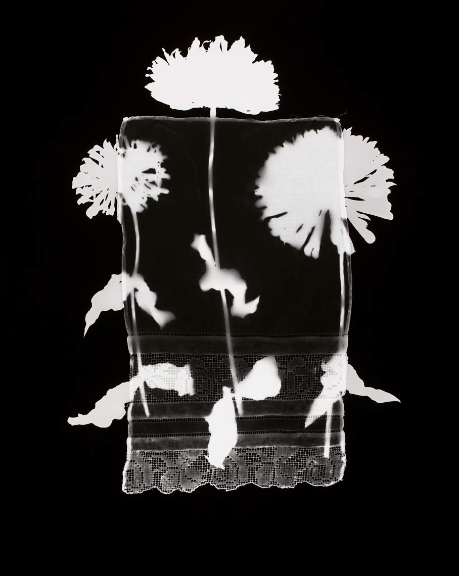 David Lebe; Specimen 14, 1978, black and white photogram