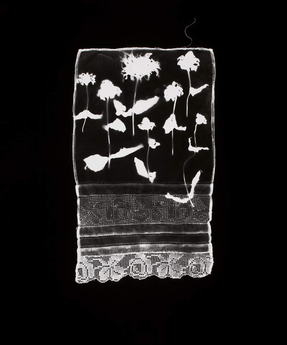 David Lebe; Specimen 15, 1978, black and white photogram