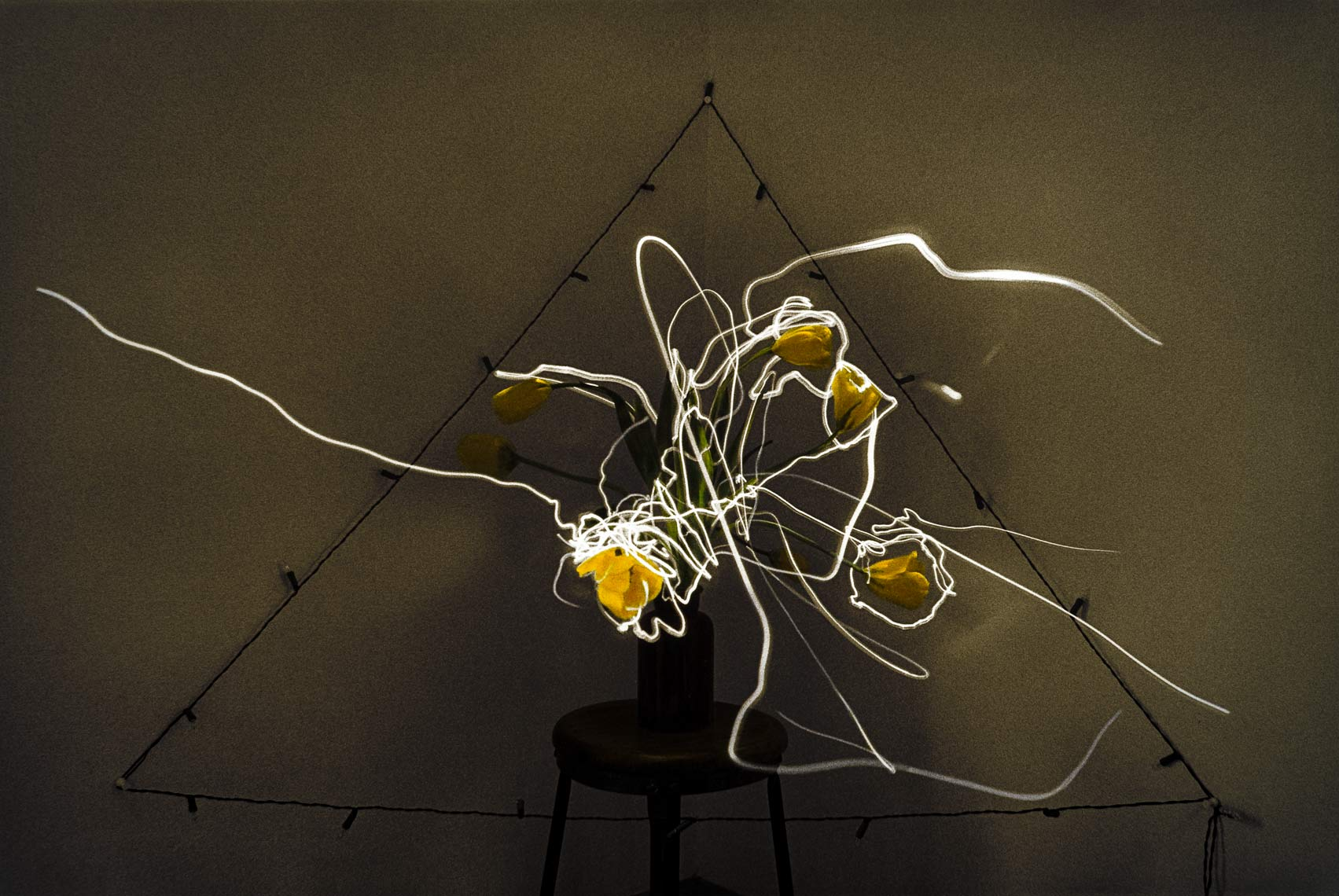 David Lebe; Yellow Tulips, 1982, still life, light drawing, hand colored photograph